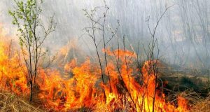 mezs_uguns